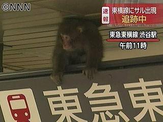 渋谷駅で猿騒動