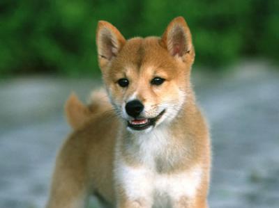 飼い犬の名前ランキング