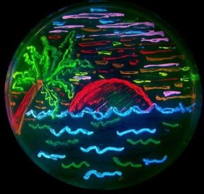 蛍光色を発するバクテリアで夕日のイラストを描く