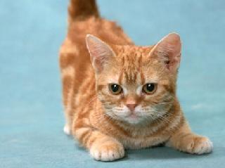 猫の名前ランキング「○○」が5連覇