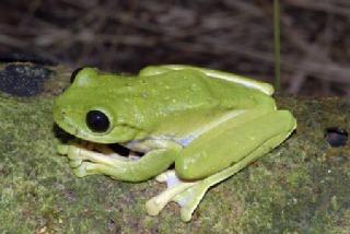 新種の生物50種以上発見か
