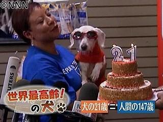 世界最長老のお犬さま♪
