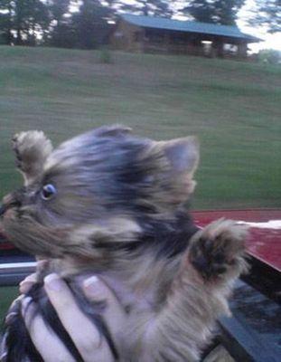 子犬をオープンカーに乗せると…